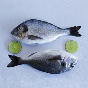 Pescado de Cultivo