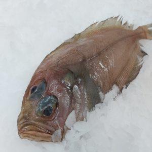 pez gallo